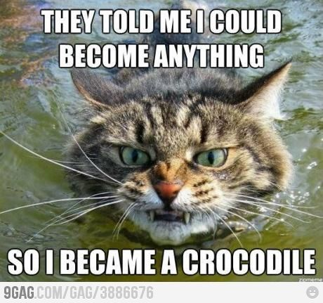 Crocat Funny Animals Funny Pictures With Captions Funny Cute