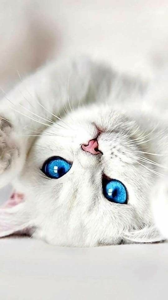 Pinterest For Business Marketing Expert Uk Specialist Cute Cats And Kittens Beautiful Cats Cute Cats