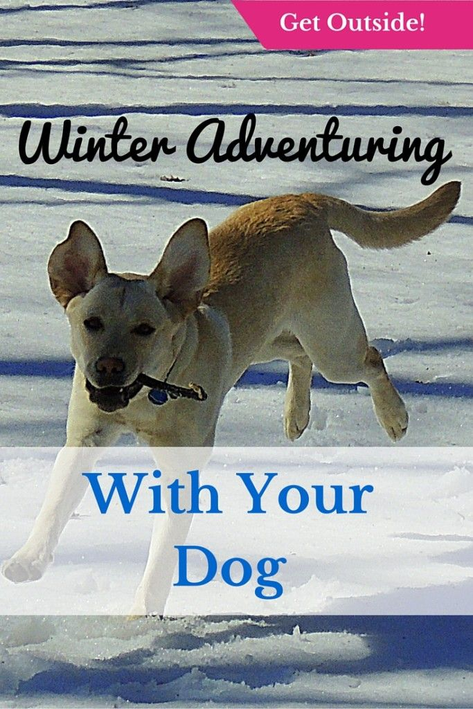 Photo of Want to take Your Dog on Your Next Winter Adventure? Here's what You should Know