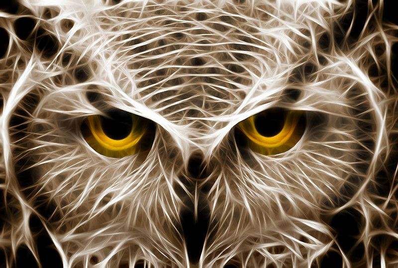 """The Owls Are Not What They Seem"" by Mikhail Palinchak 