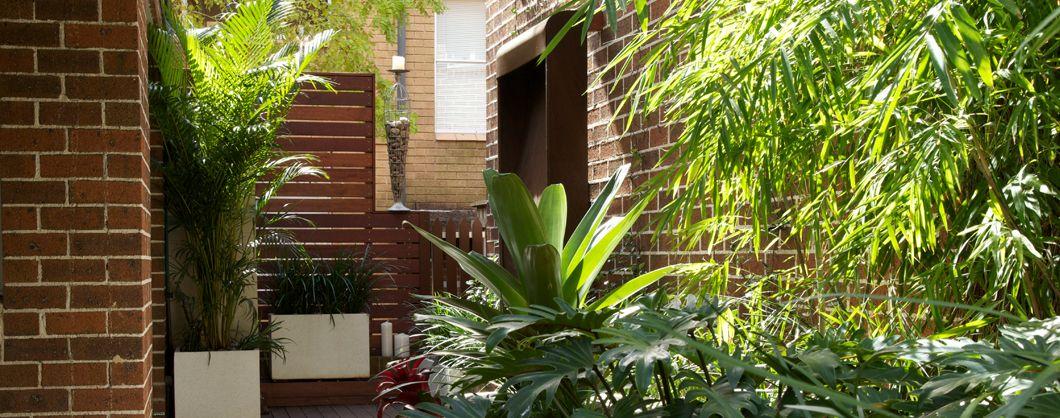 Garden Designs Cammeray Courtyard Vasos Divisores De Espaco