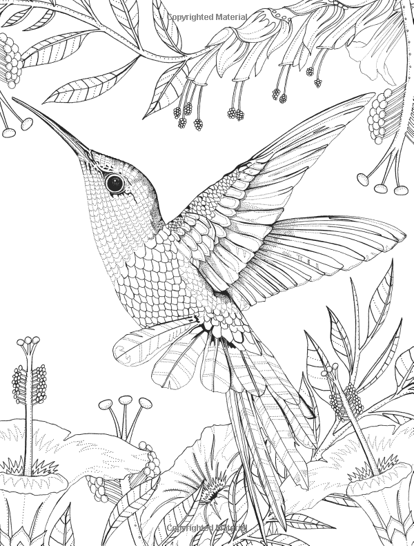 Hummingbird Animal Coloring Pages. Amazon com  Birdtopia Coloring Book 9781780677552 Daisy Fletcher Books Hummingbird Printable Pages Digital download of