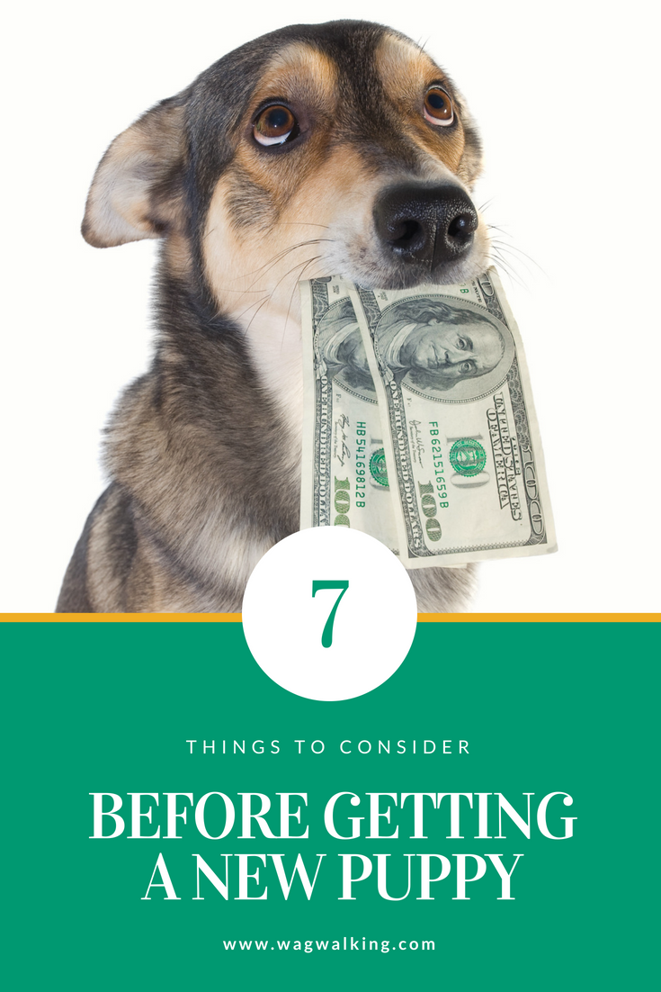 Dog Care - Financing Your Puppy: 7 Things to Consider Before