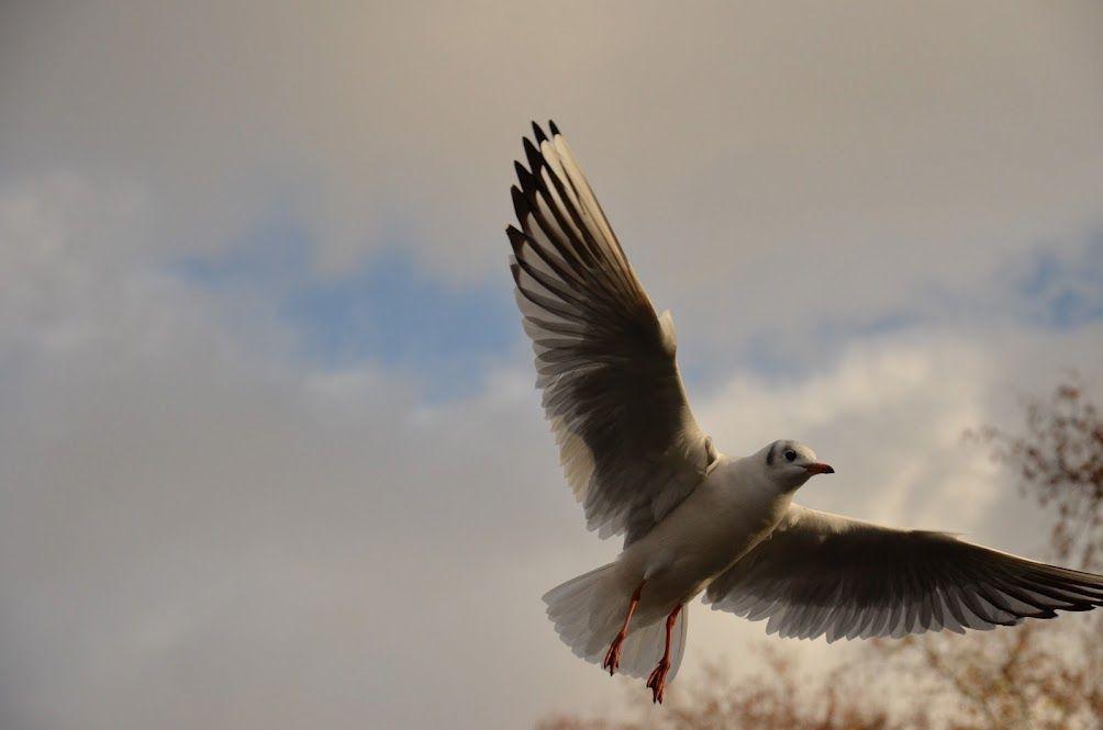 A bird in London - 2011
