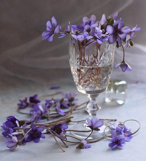 #veilchen #violet