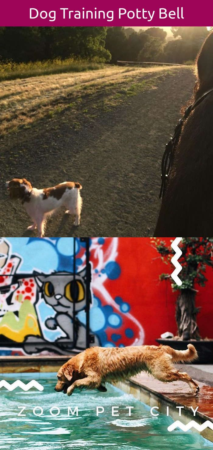 Funny dog name generator dog diy hacks pinterest dogs dog