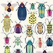 Beetle Wrapping paper