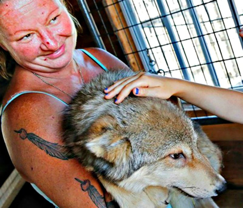 Protect these wolves! PETITION UPDATE Slaughterhouse Fur-Ever Wild - business petition