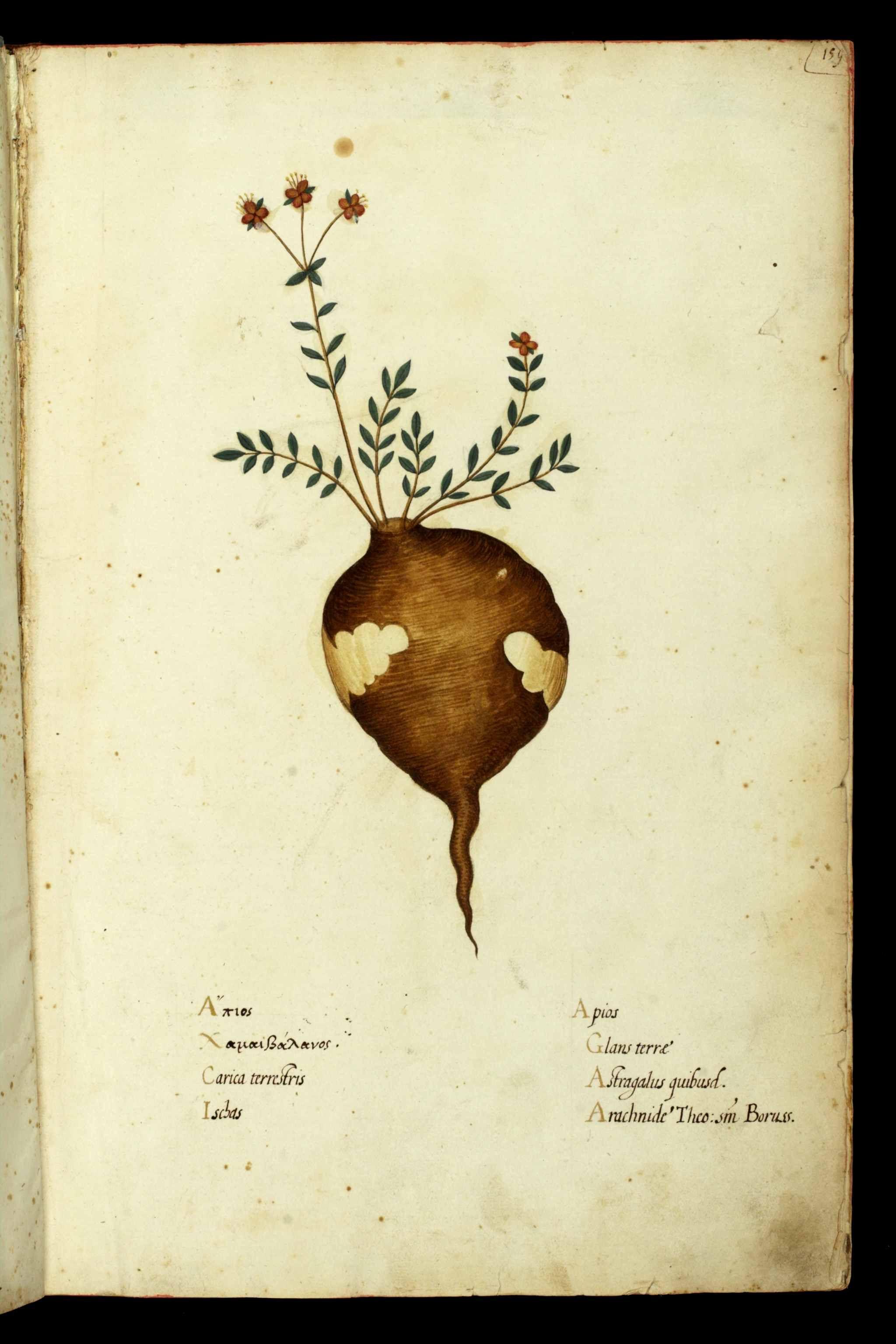 Magnum opus, by Ulisse Aldrovandi (1522-1605)