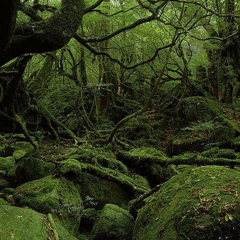 """sericite: """" aromaleigh: """" green serene. (via dendrites: """" fullbloom:shimmerandrot:(via swampgirl) """" """""""