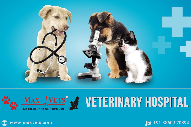 Pin On Pet Hospital