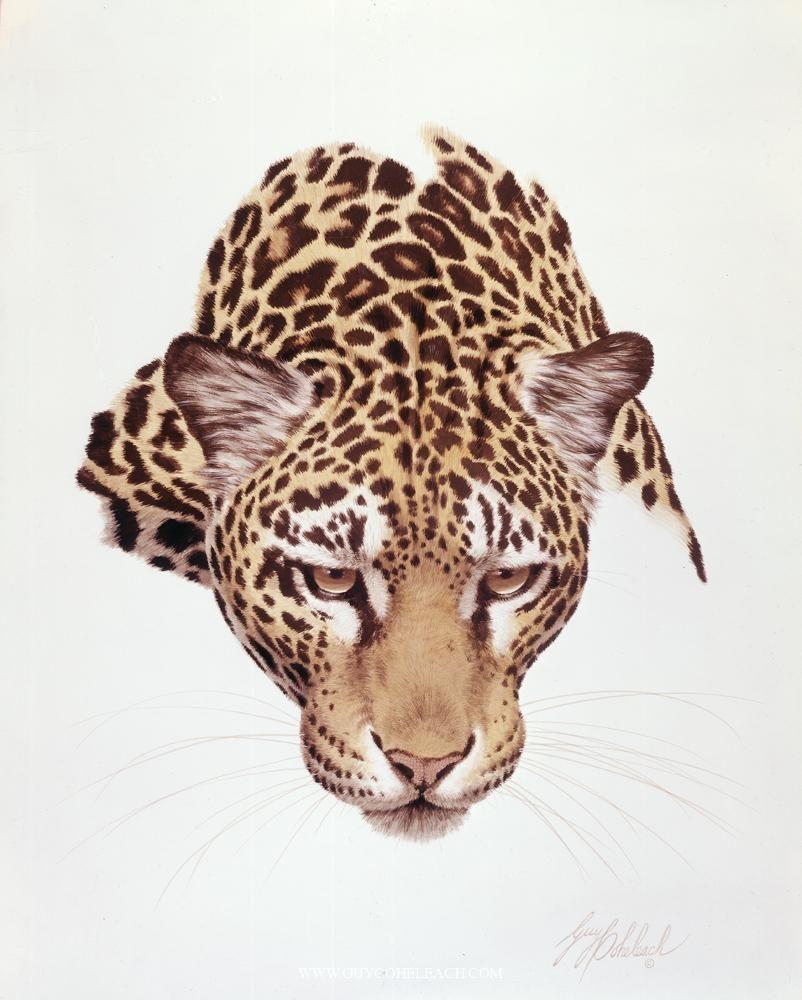 PORTRAITS OF THE BIG CATS 2