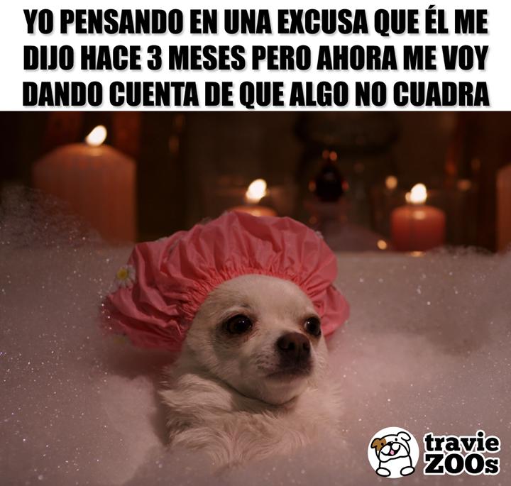 Algo No Me Cuadra Aqui Funny Memes Cute Animals Funny