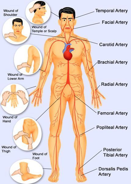 Human Body Pressure Points | Medical Info | Pinterest | Pressure ...