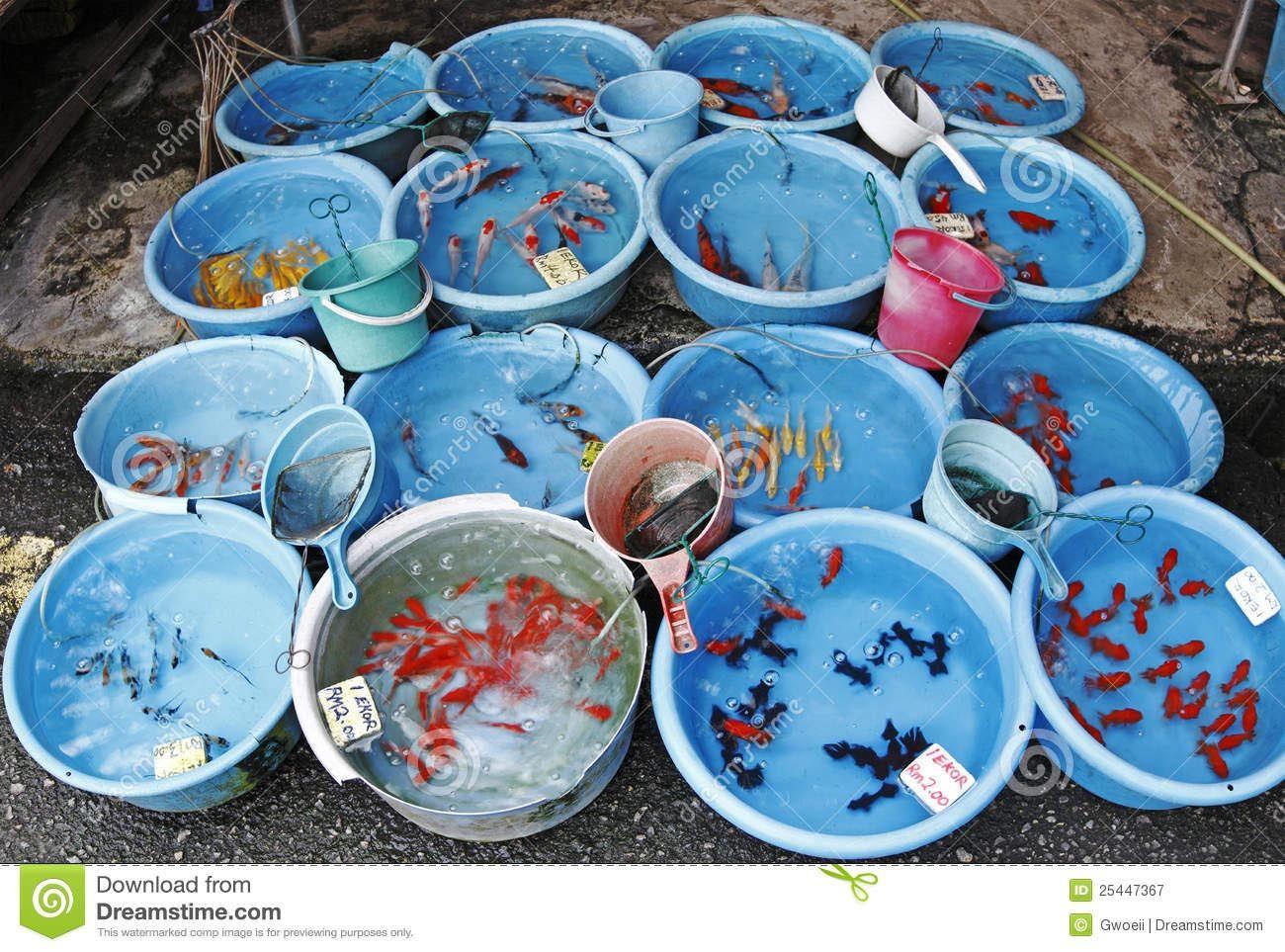 Fish for marine aquarium - Marine Fish Aquarium Malaysia