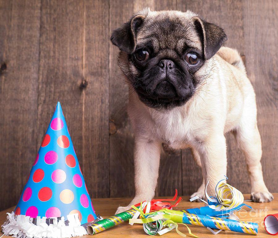 Happy Birthday Cute Pug Puppy By Edward Fielding In 2020 Cute