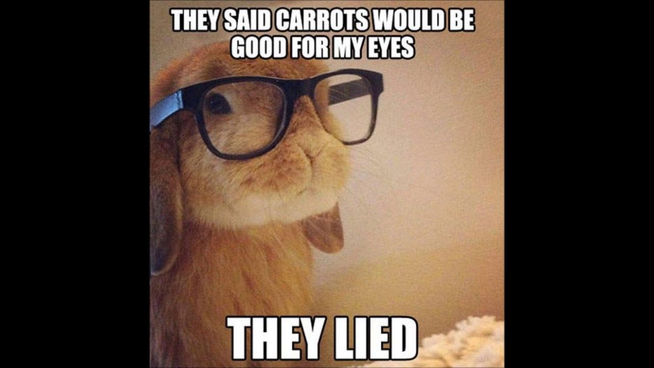 A Funny Meme Compilation To Make Any Bad Day Better Internet Meme Com Cute Funny Animals Funny Animal Quotes Funny Bunnies