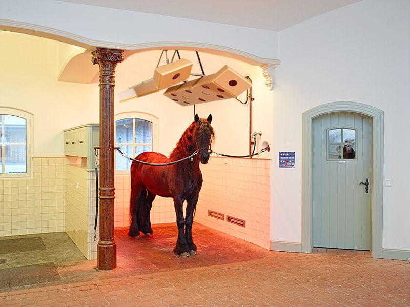 Smart Wash Box And Solarium By Equus Design Horse Crazy