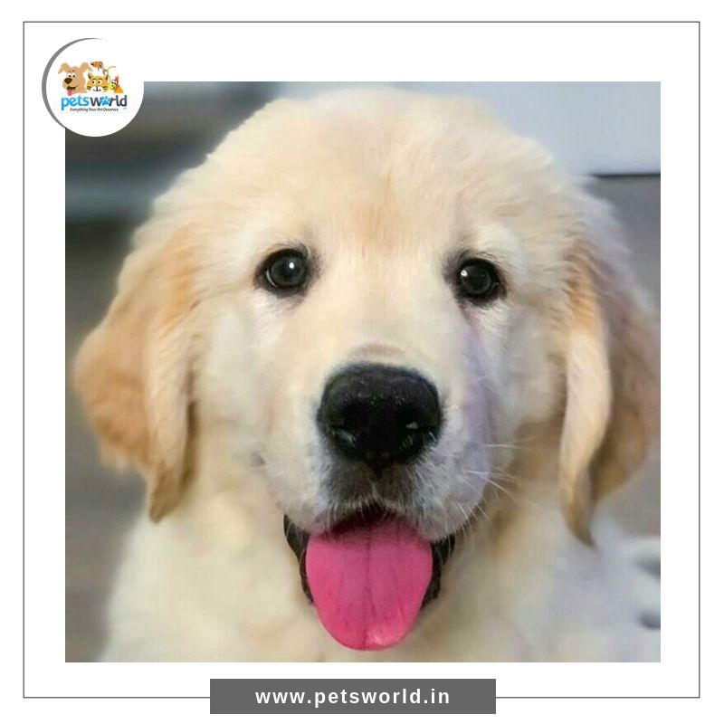 Happiness Is When You Look At Your Puppy Forget All Your Problems 3 Petsworld Dogs Puppy Pets Dog Puppies Puppylove Pets Puppy Quotes