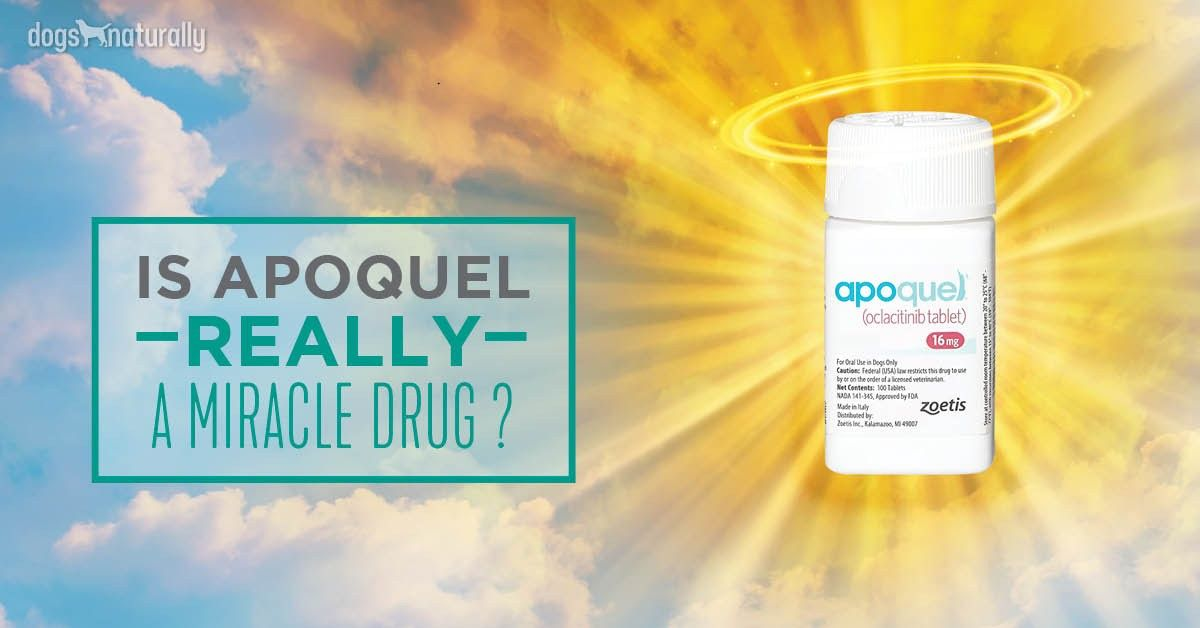 Apoquel Vet Says Beware The Side Effects Apoquel Dog Allergies Dog Insurance