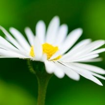 White flower with yellow middle floral pinterest floral arch white flower with yellow middle mightylinksfo