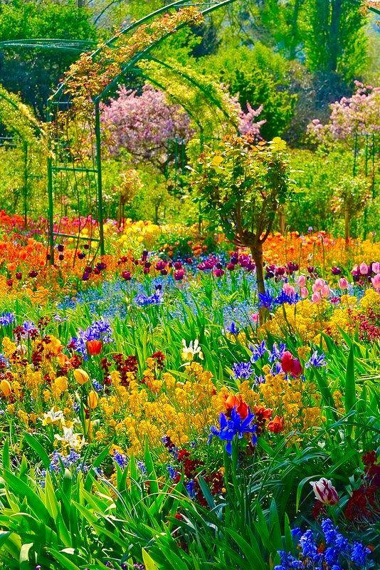 Le jardin de Claude Monet | Monet garden giverny, Garden ...