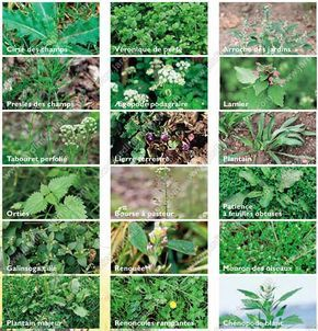 Voici comment vous pouvez vous débarrasser des mauvaises herbes