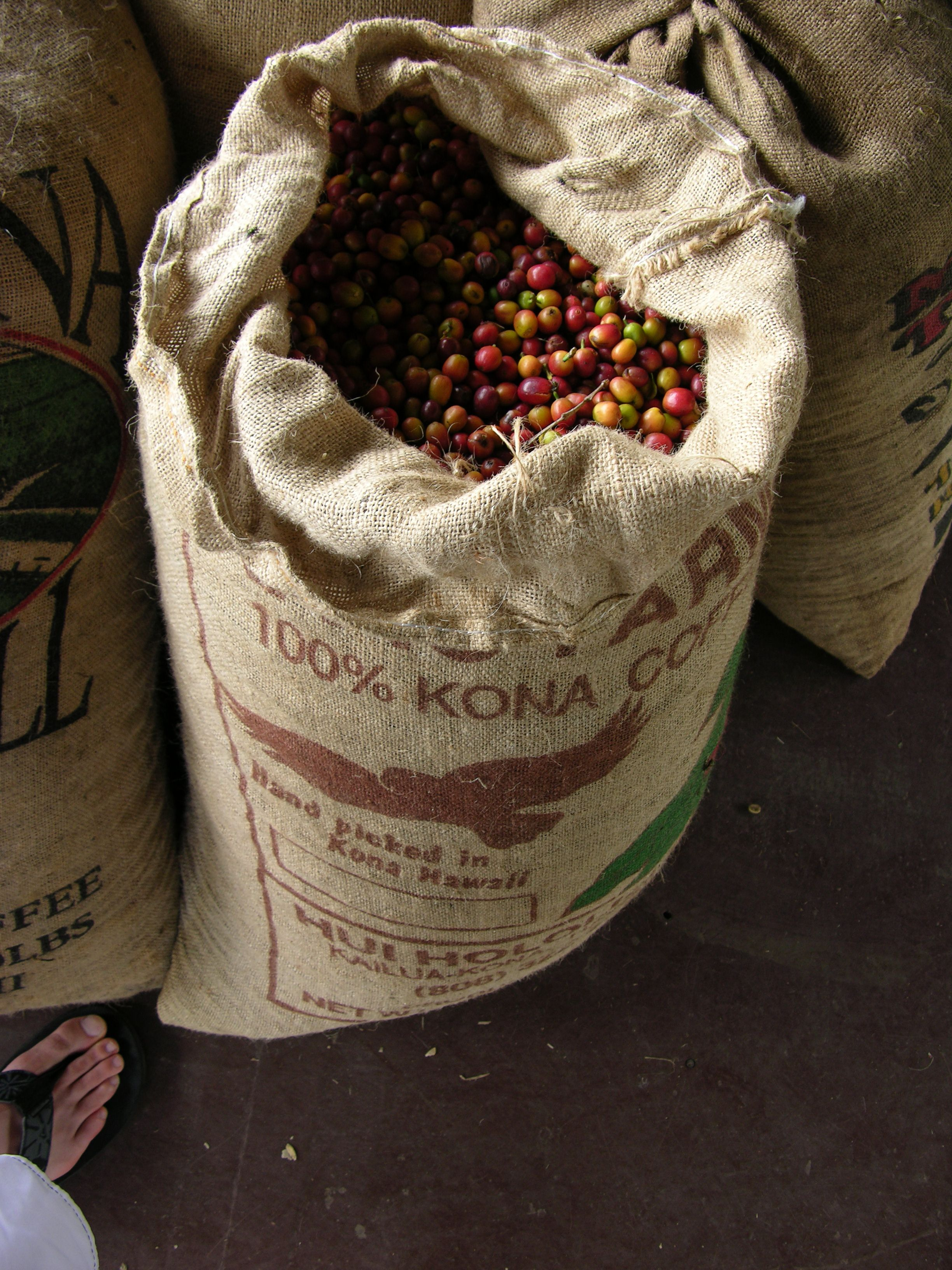 Kona coffee plantation
