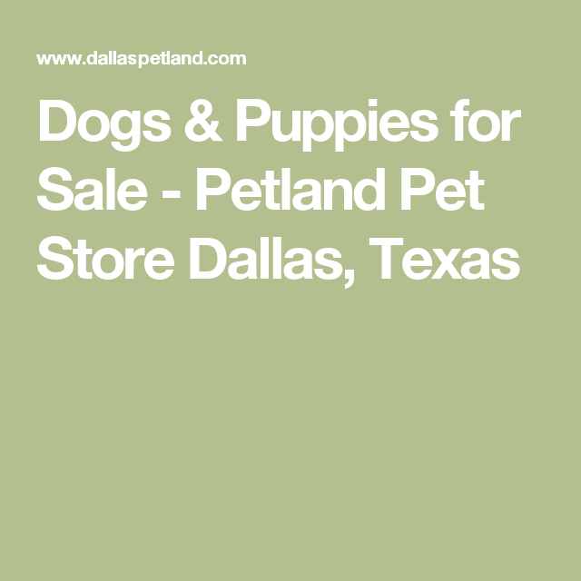 Dogs Puppies For Sale Petland Pet Store Dallas Texas Puppies For Sale Puppies Pet Store