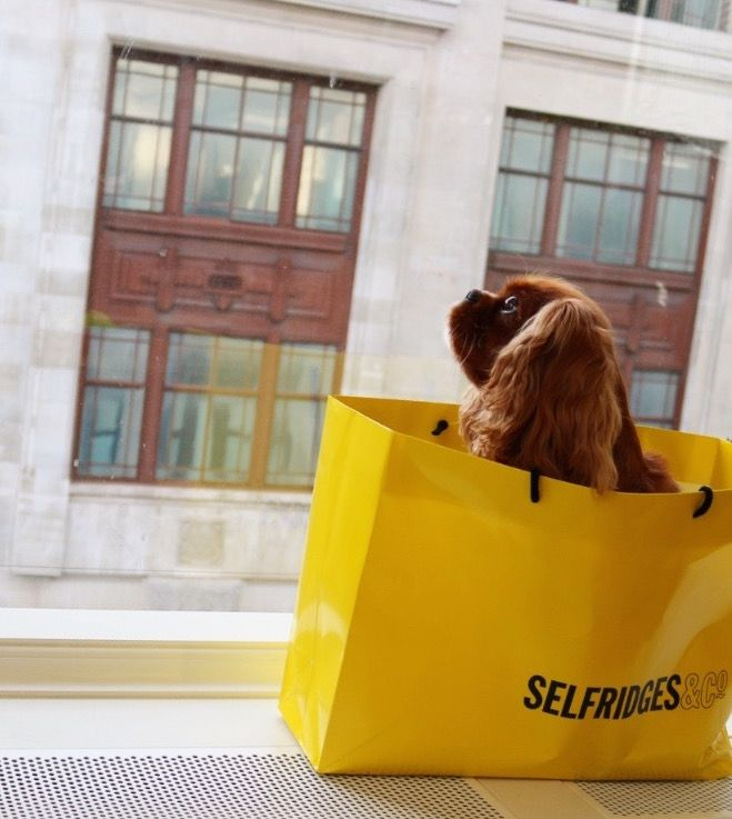 Selfridges With Your Dog , cavalier king charles spaniel in