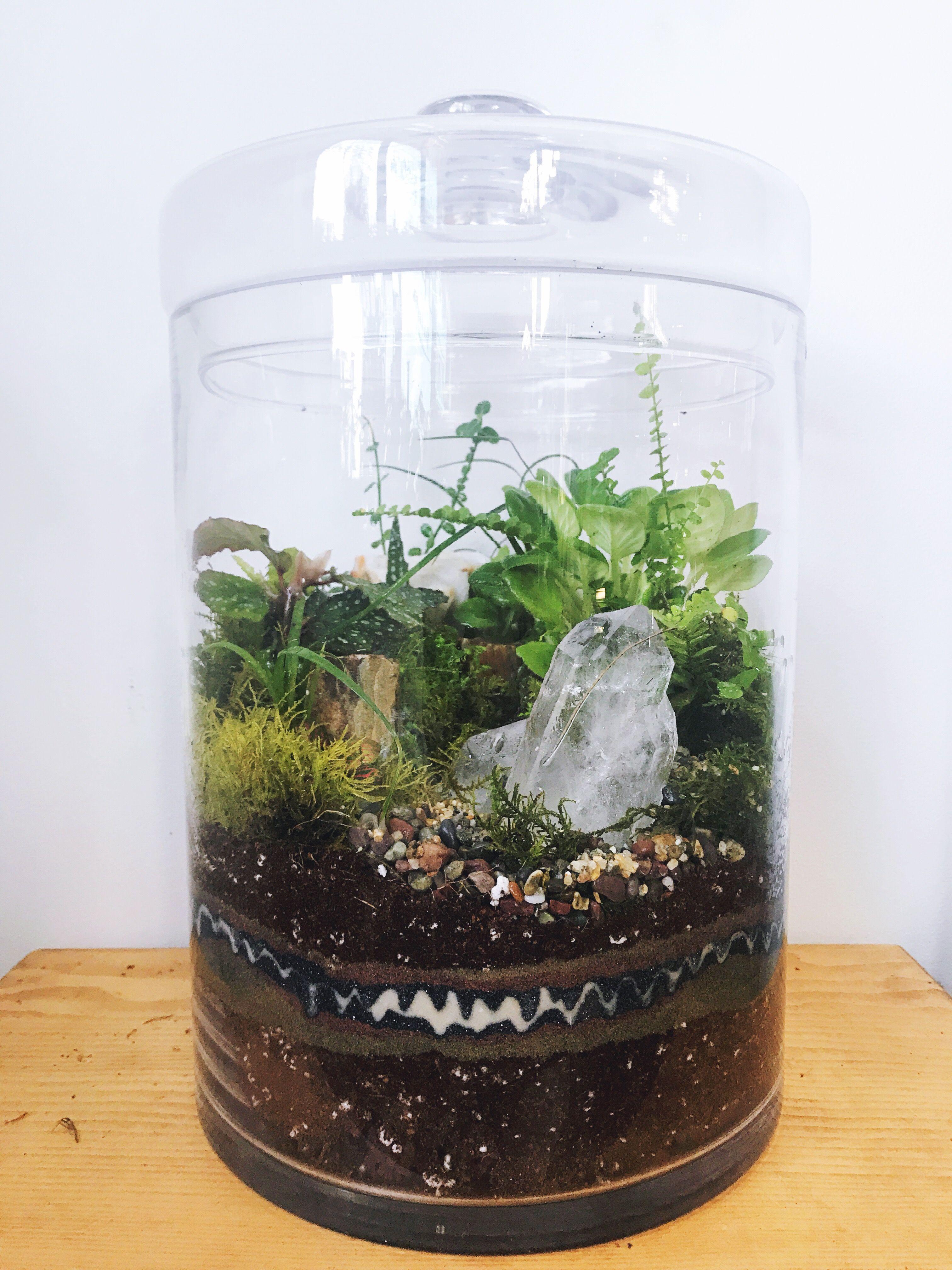 Diy Glass Terrarium Indoor Houseplants Brazilian Quartz Custom