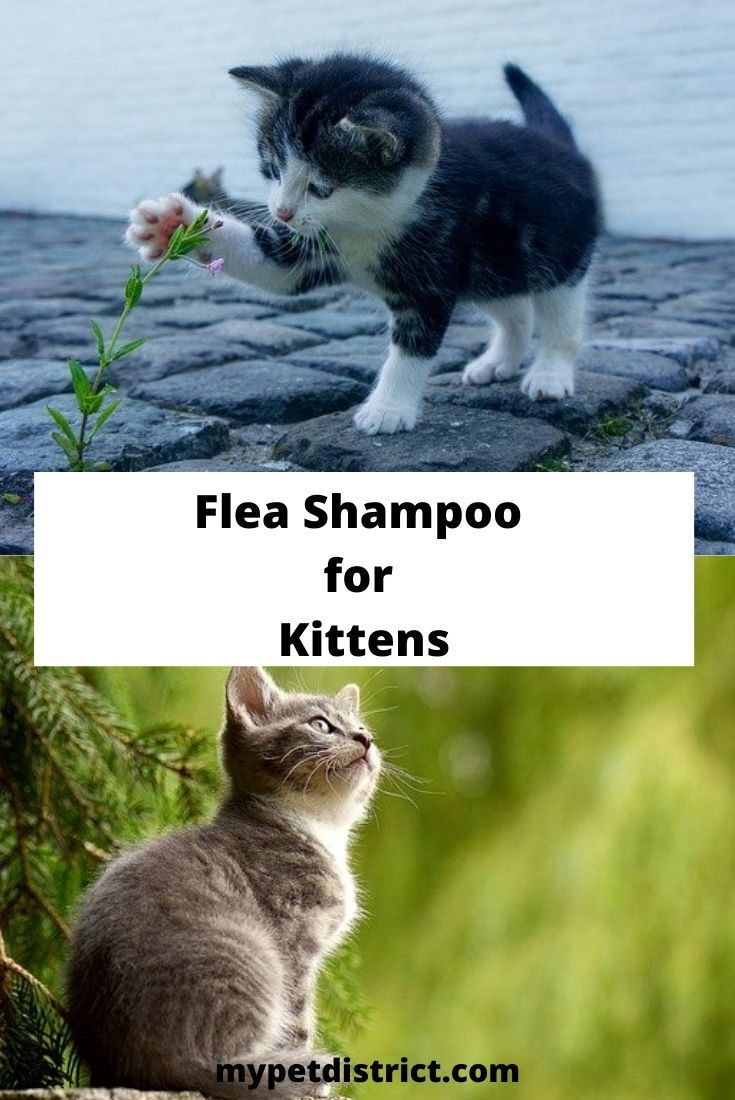 Can you use dog flea shampoo on cats the answer will