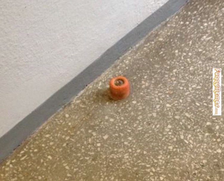 Funny memes This doorstop looks like a carrot butt...