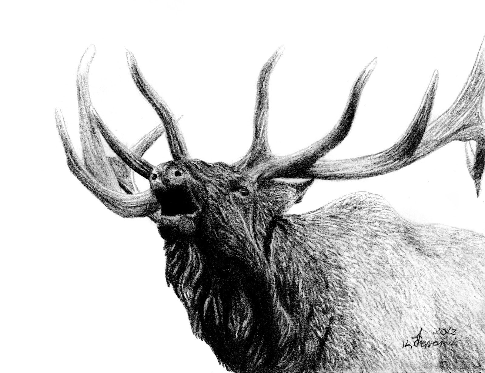 Pin by Dottie Cordwell on I am horny | Pinterest | Elk ...