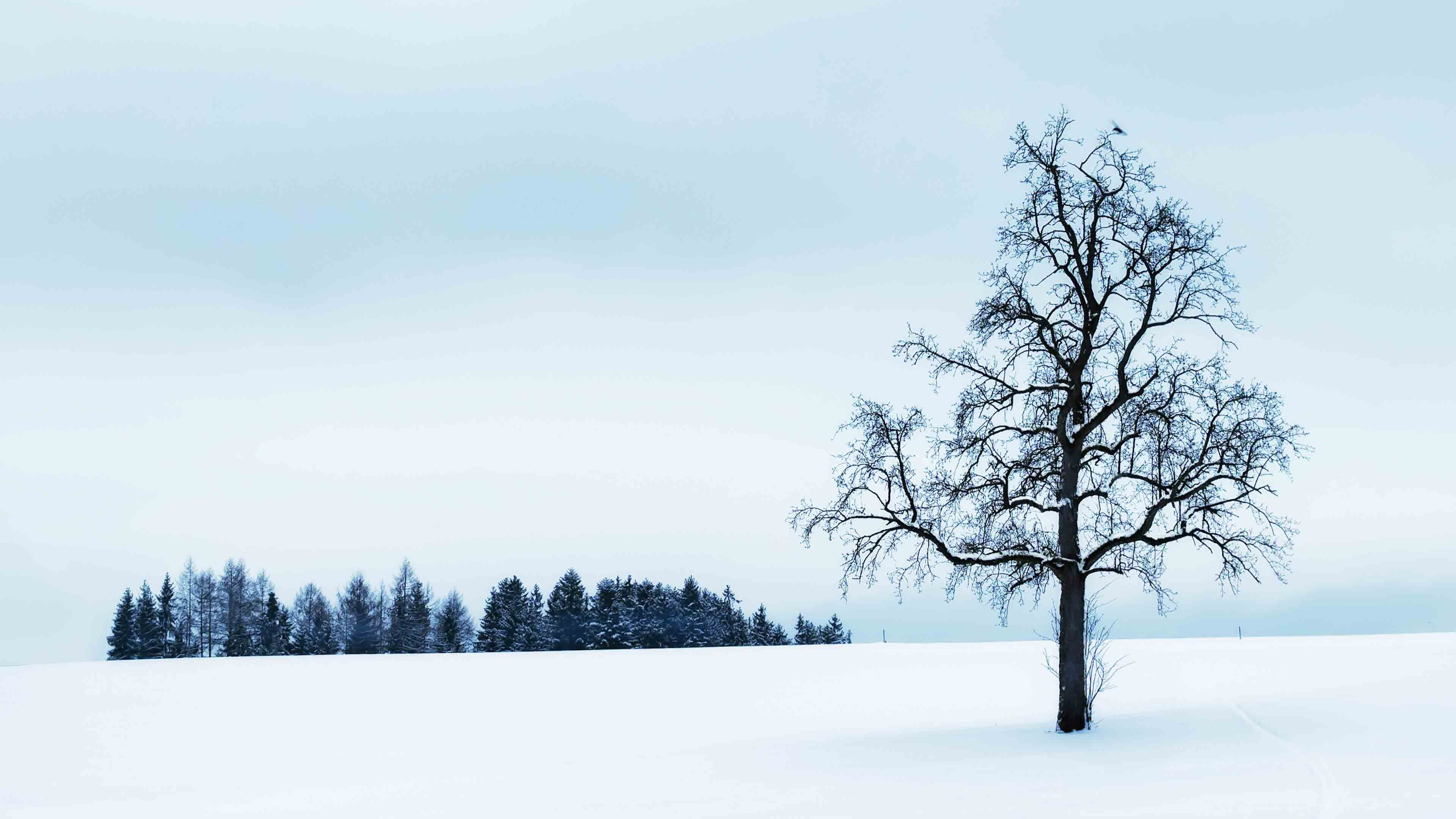 Wallpaper Snow Stock Photography Free Wallpaper Pc Wallpaper Find the perfect background image, updated daily! pinterest