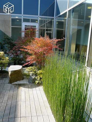 plante pour balcon terrasse brise vue