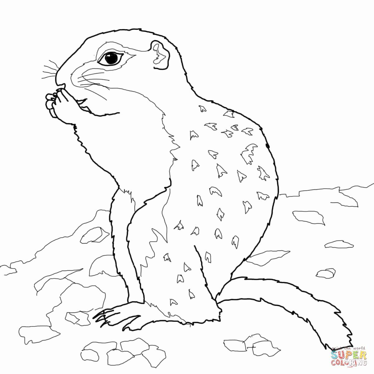 Groundhog Day Coloring Sheet Dengan Gambar