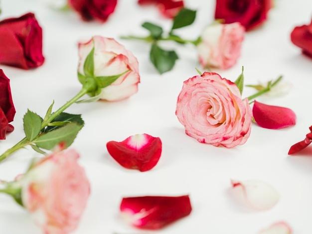 صور ورد واجمل صور ورود وزهور وازهار طبيعية جميلة ورائعة Zina Blog Radish Vegetables
