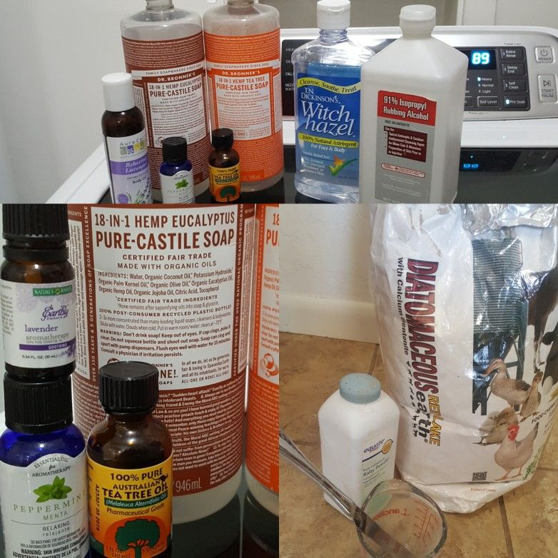 Best Bed Bug Home Remedie Of Course This Is Just The Spray And