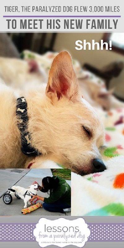 Paralyzed Dog Homeless Dog Dog Adoptions Special Needs Dog