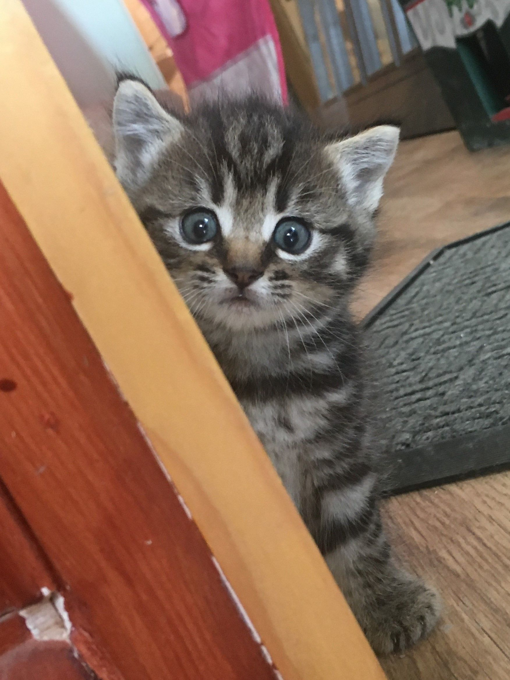 Boo Our Very Cute Kitten Discover The Story Of Misty And Boo At Littlemisscat Com Kittens Cutest Kittens Cat Lovers