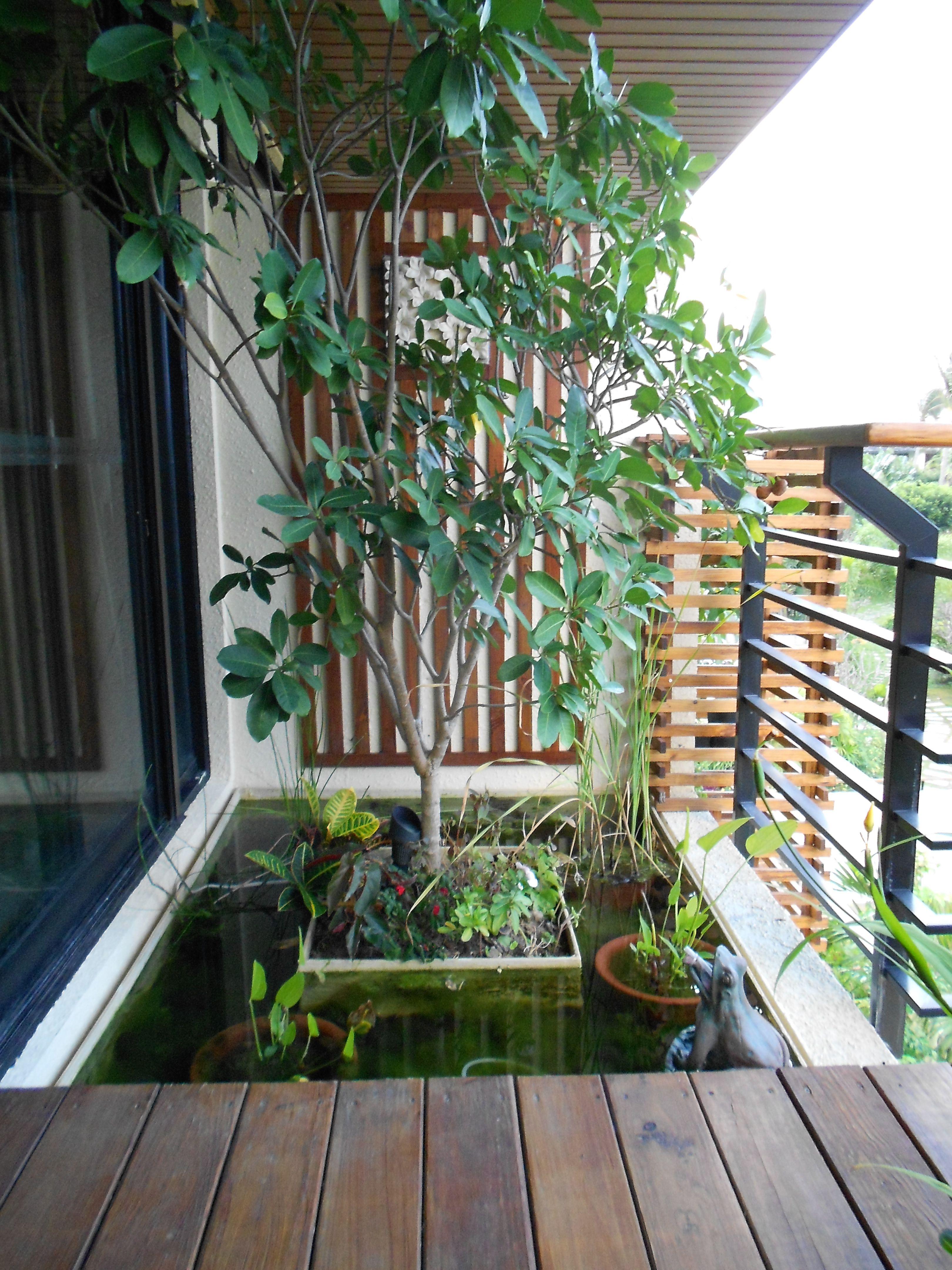 Mini Laghetto Per Terrazzo balcony water garden in taiwan (dengan gambar) | rumah