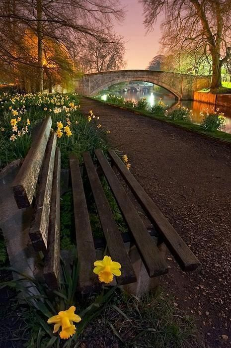 spring evening in cambridge, england UK