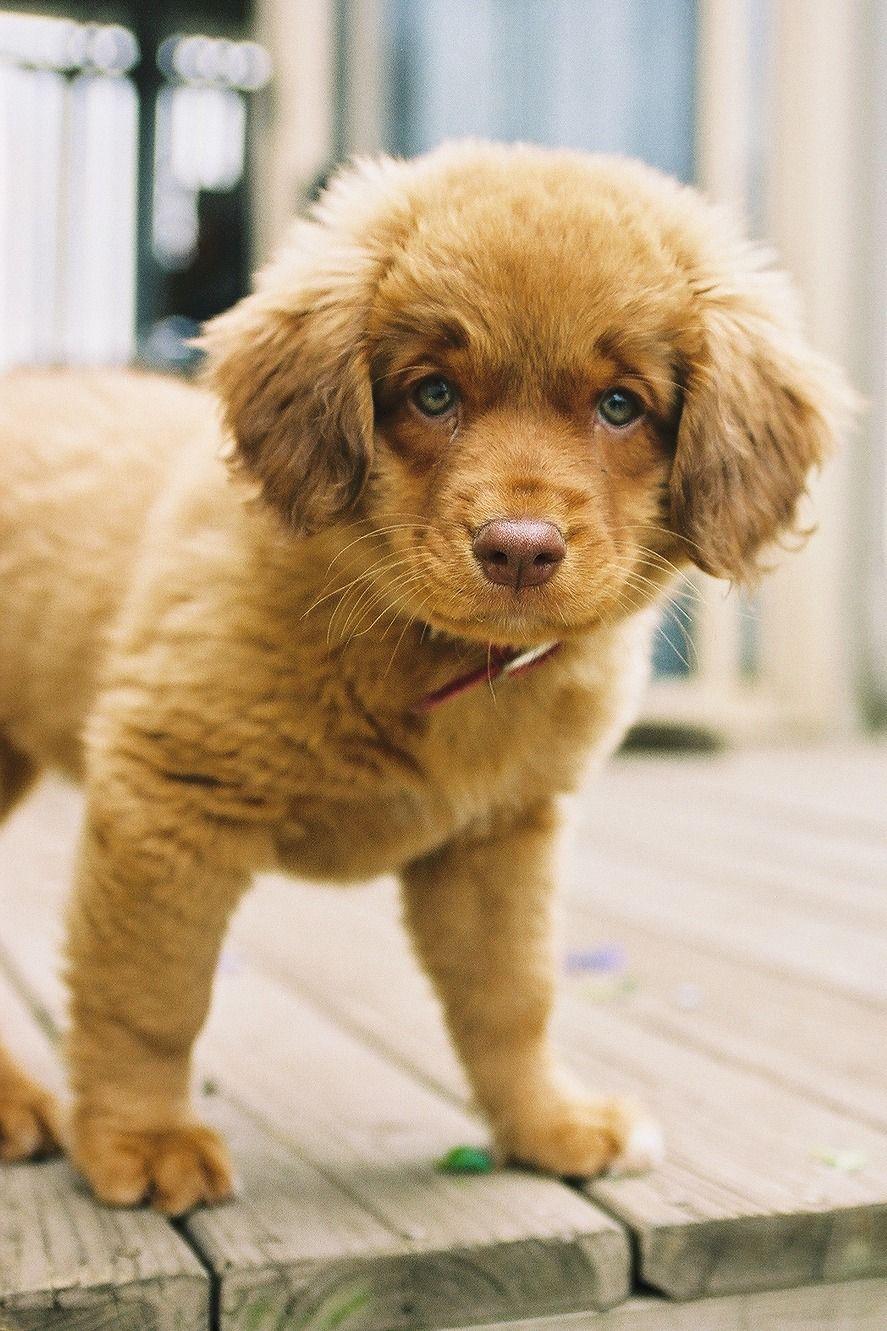 Puppy By Urania Kennel Animals Animals Friends Pets