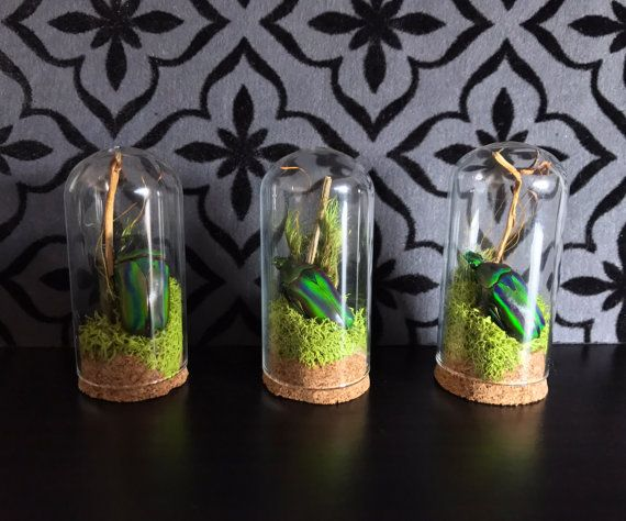 Victorian Green Beetle Miniature Terrarium Glass Dome Display, Gothic Decor, Curios Cabinet, Altar, Oddity, Real Beetle
