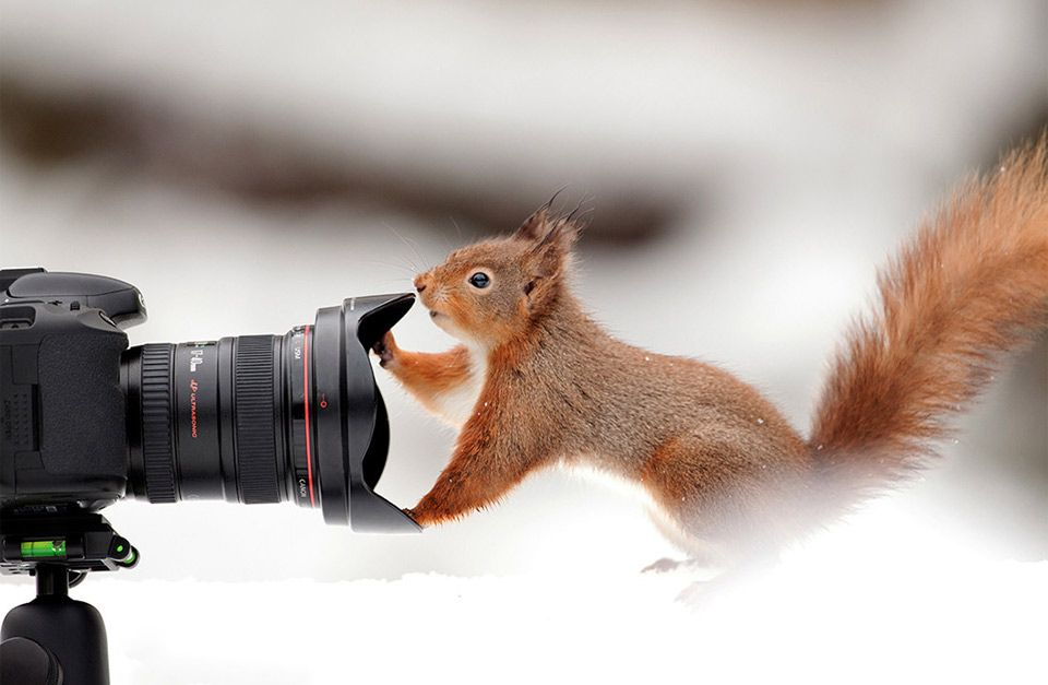 Squirrel And A Camera By Giedrius Stakauskas