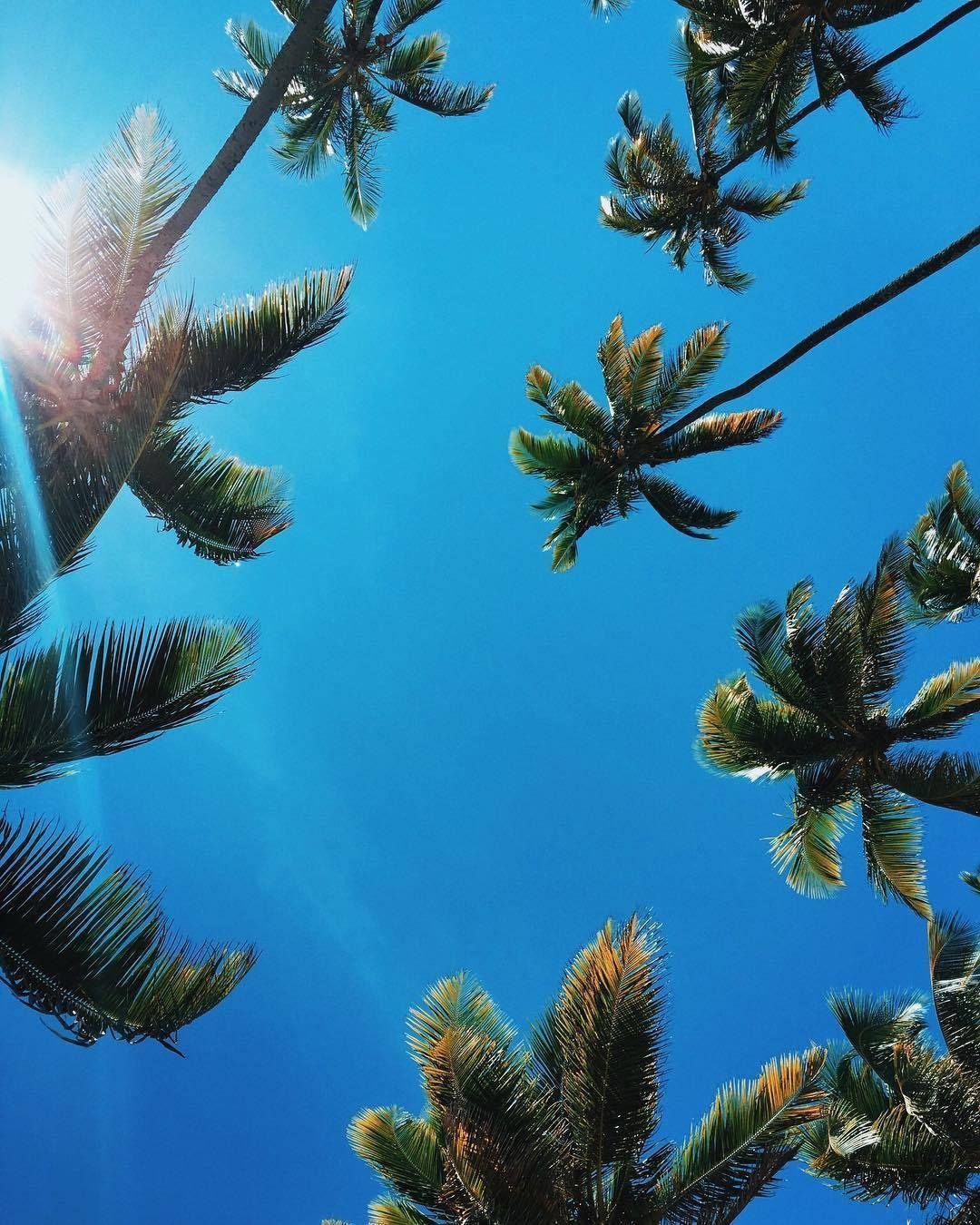 alohacoast blue coast sun