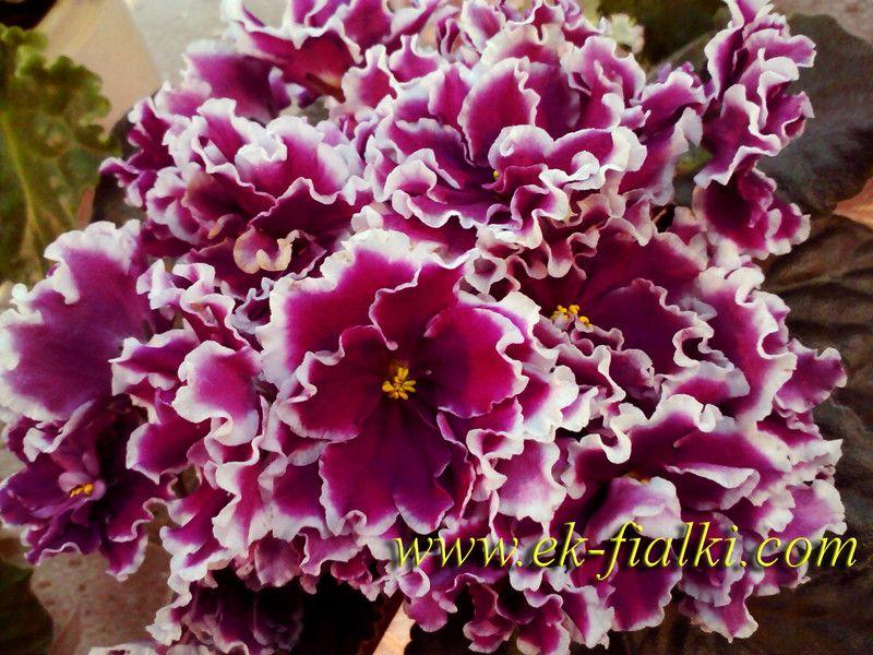 цветы картинки крупные