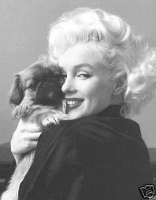 Marilyn Monroe and her pekingese. Pekingese dog art portraits, photographs, information and just plain fun. Also see how artist Kline draws his dog art from only words at drawDOGS.com #drawDOGS http://drawdogs.com/product/dog-art/pekingese-dog-portrait-by-stephen-kline/ He also can add your dog's name into the lithograph.