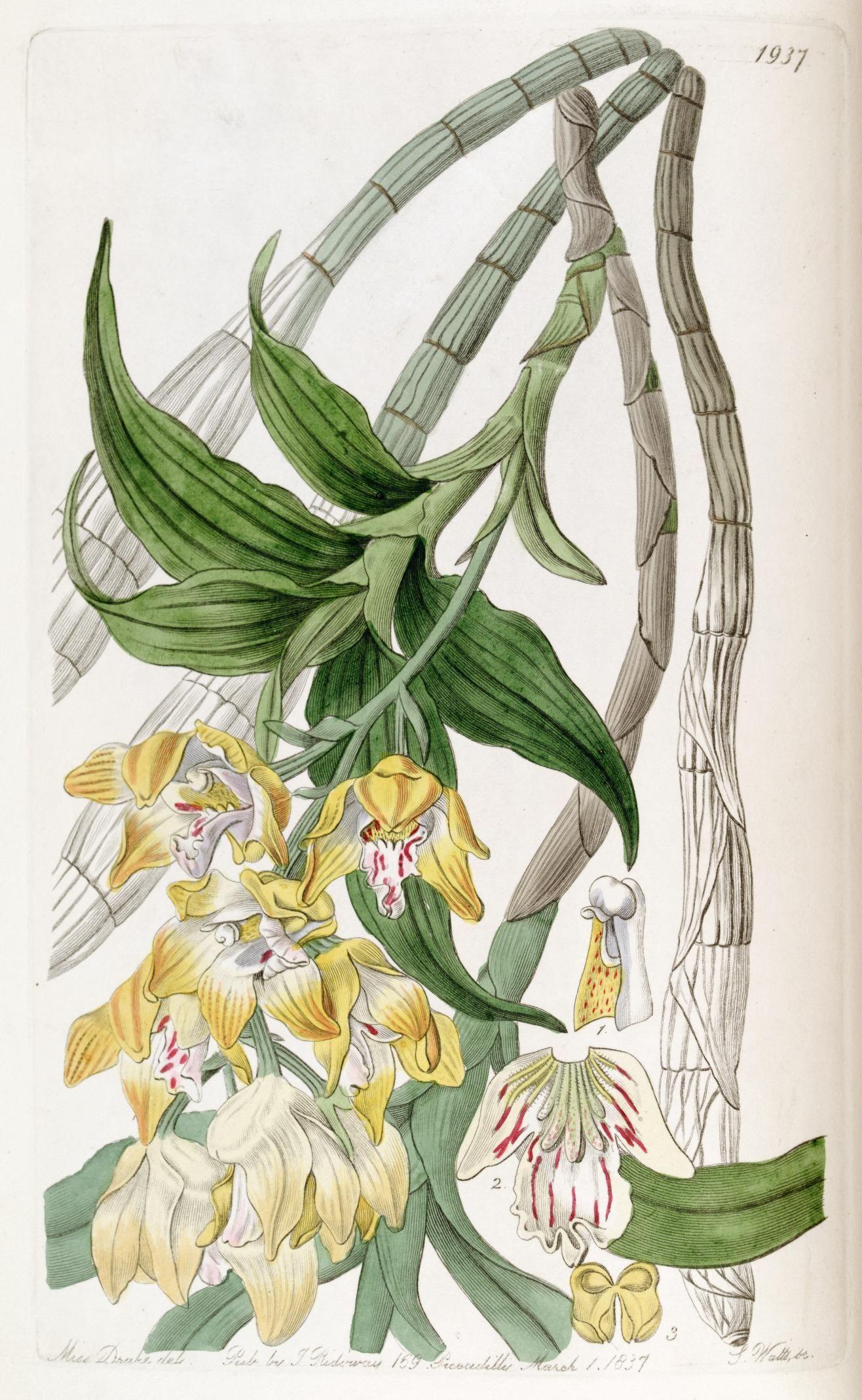 v. 23 (1837) - Edwards's botanical register. - Biodiversity Heritage Library